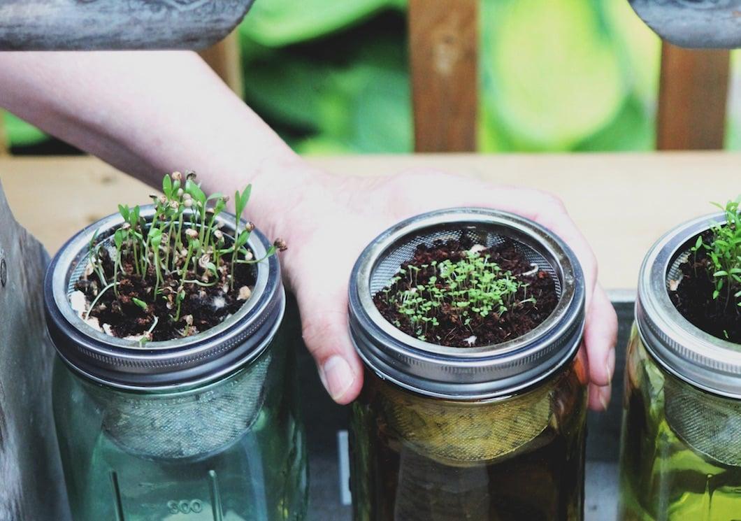 plants with microgreens
