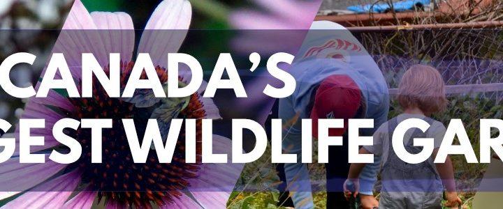 canada's biggest wildlife garden