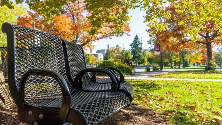 park bench with fall leaves