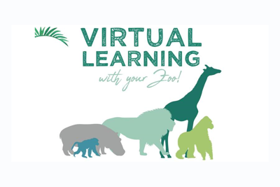 virtual learning with toronto zoo