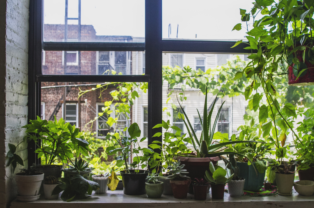 small garden on window sill